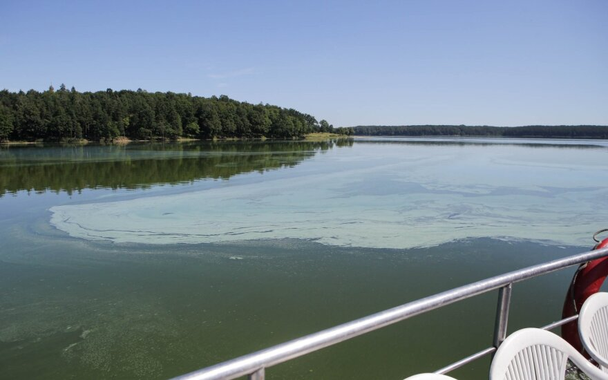 Marzipan Smell in Kaunas Sea