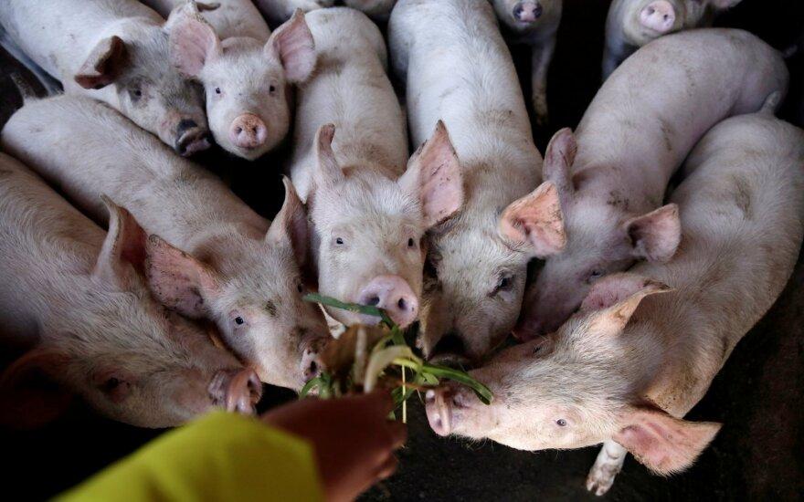 Kinijoje maras išguldė kiaules, bet šalis tikina atsitiesianti