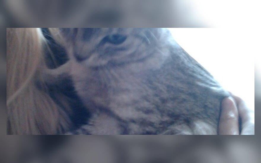 Katytė Pira ieško namų