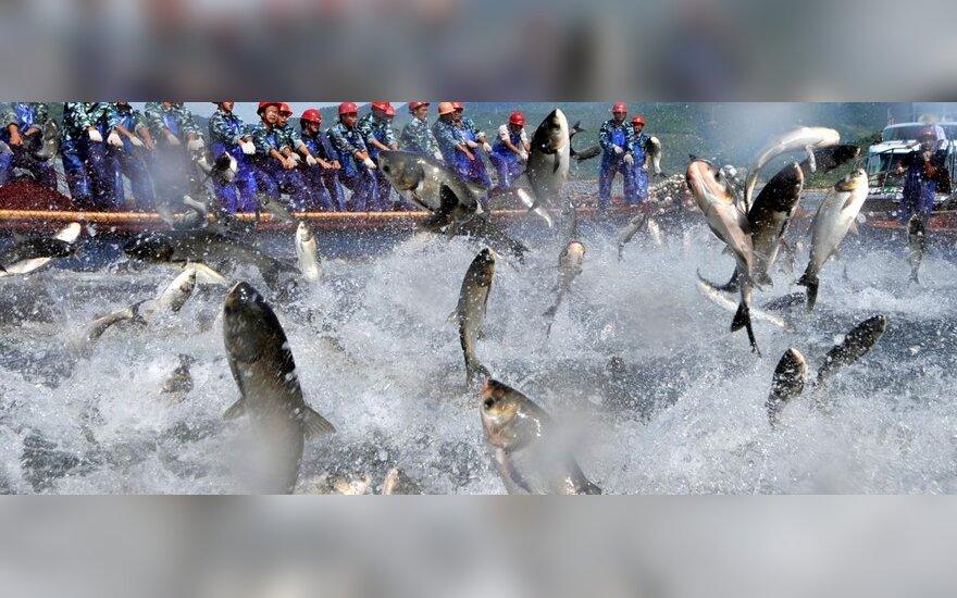 ES ketina nepriimti islandų sugautų skumbrių, nes šie jų esą sužvejoja per daug