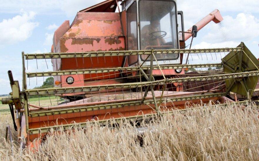 Ukrainiečiai lietuviams pavydi gerų derlių