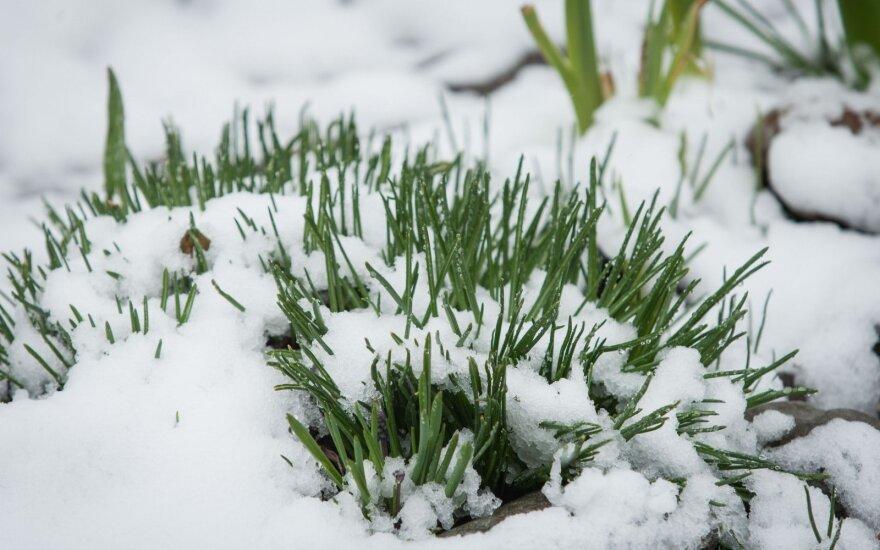S. Paltanavičius: sulaukėme nepaprasto pavasario