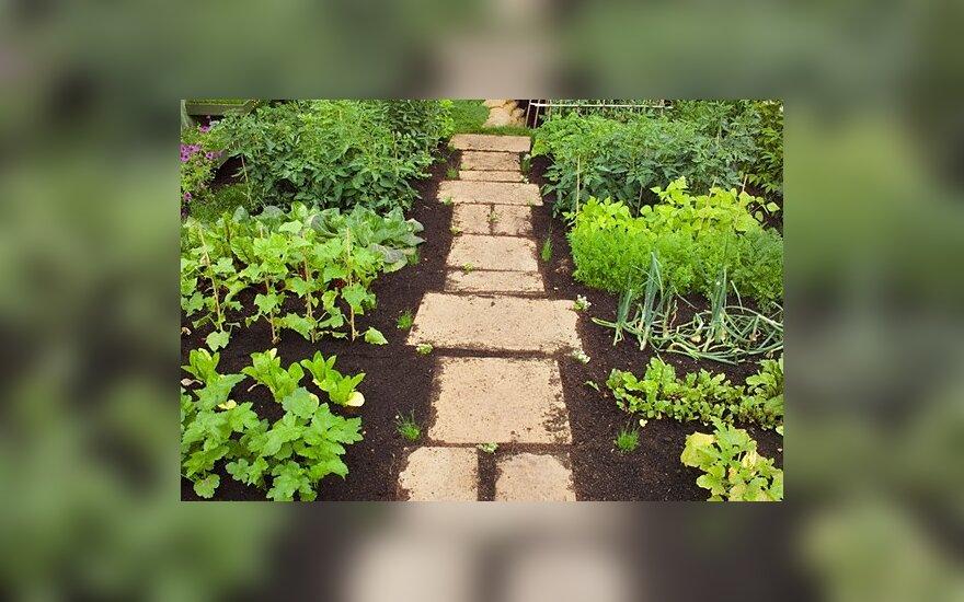 Tarp ūkininkų populiarėja nelegalios augalų apsaugos priemonės