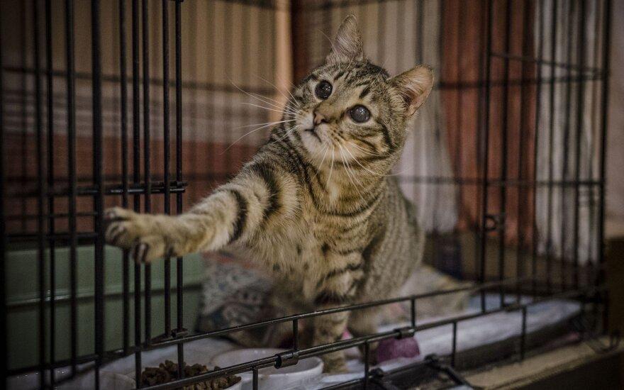 Daug iškentęs katinėlis Vėjas nepraranda vilties rasti šeimininkus