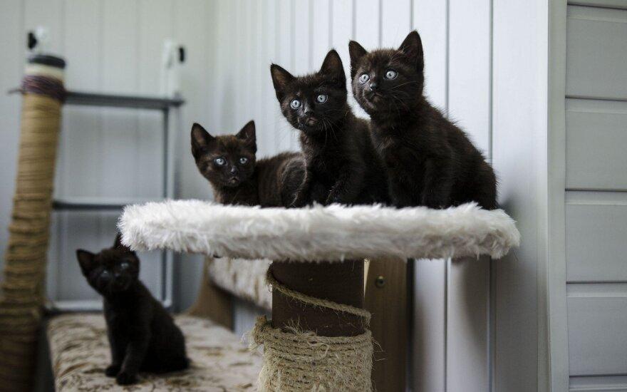 Mieliems kačiukams reikia namų: atsidėkos murkimu ir nekaltomis išdaigomis