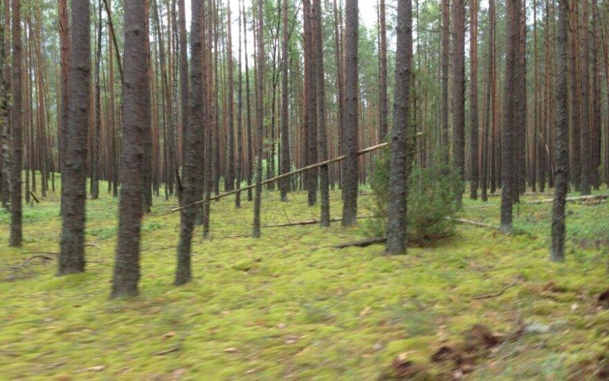 Klaipėdos r. žmonės rado po šakomis paslėptą lavoną