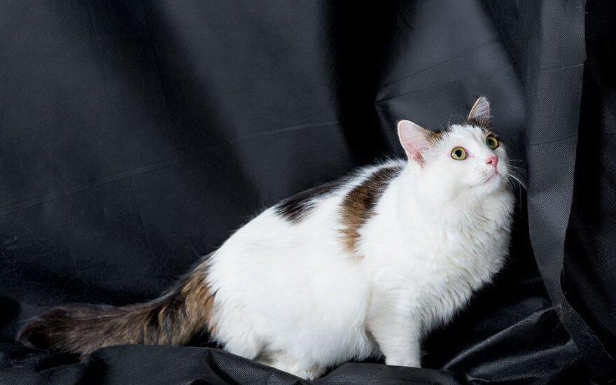 Katinas Mažylis ieško namų