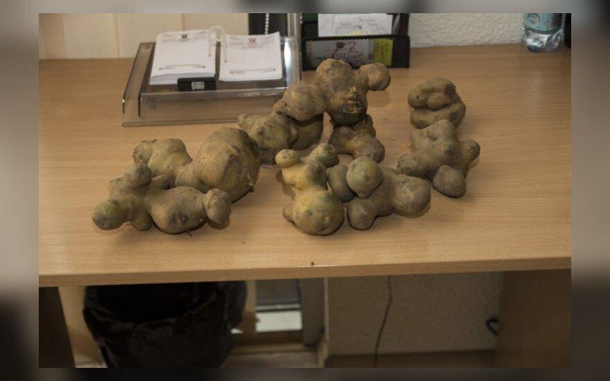 Įspūdingos daržovės džiugina net lapkritį