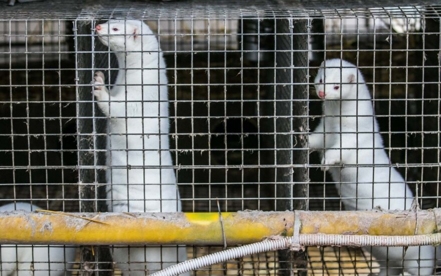 MPs calls for ban on fur farming