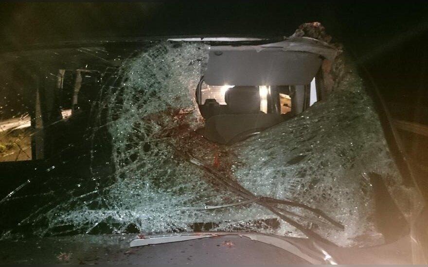 Briedžio ir automobilio avarija