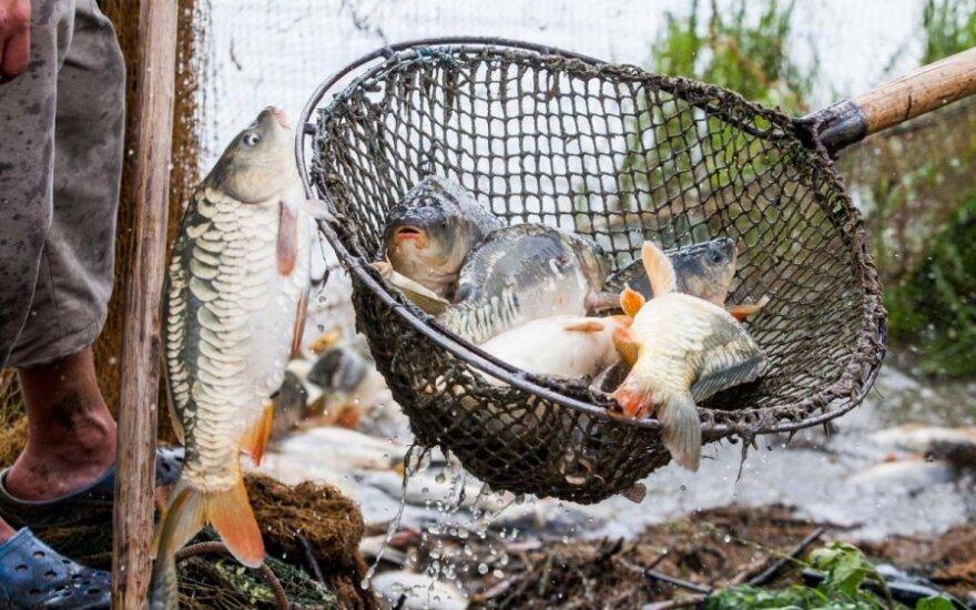 Stresuojančios žuvies skonis suprastėja
