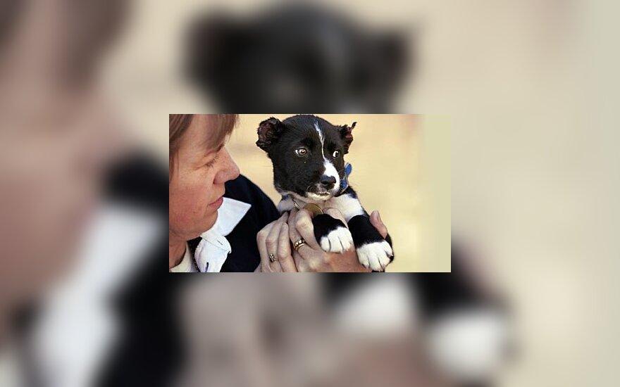 Australijoje žirklėmis žiauriai sužalotas šunytis