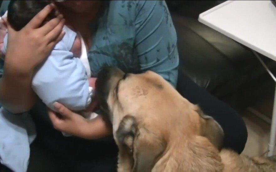 Mama grįžo namo su kūdikiu. Pažvelkite, kaip reagavo jos vokiečių aviganiai