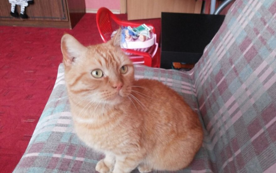 Katinėliui skubiai reikia naujų namų!