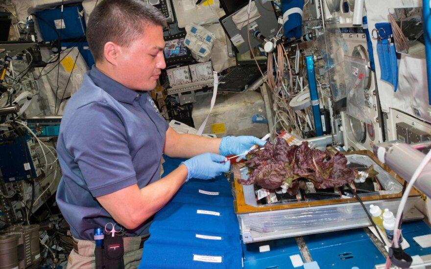 NASA astronautas Kjell Lindgren skina TKS užaugintas salotas