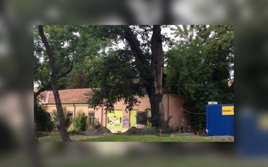 Ąžuolui Sereikiškių parke galėtų būti 400 - 500 metų