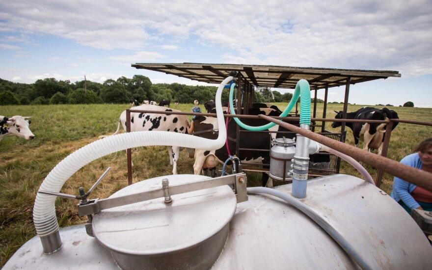 Pradėjo augti pieno supirkimas