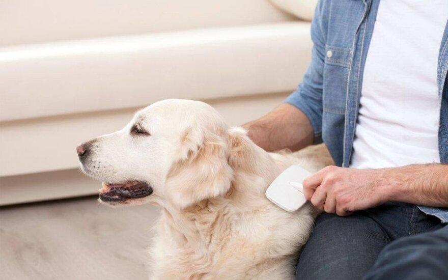 Šuns priežiūra