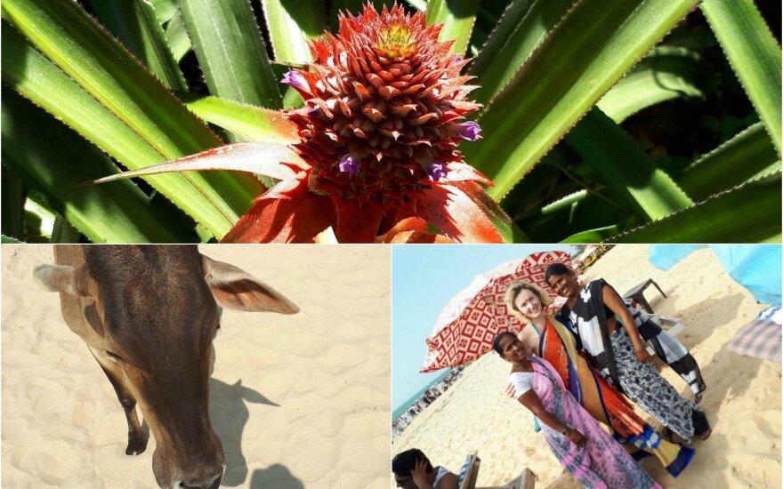 Kelionė į Indiją pranoko lūkesčius: atvažiavome ne bjaurėtis šiukšlėmis, o domėtis vietos kultūra