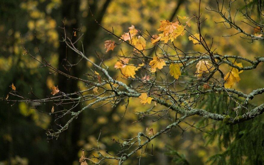 Orai: ilgai laukti pokyčiai jau pakeliui