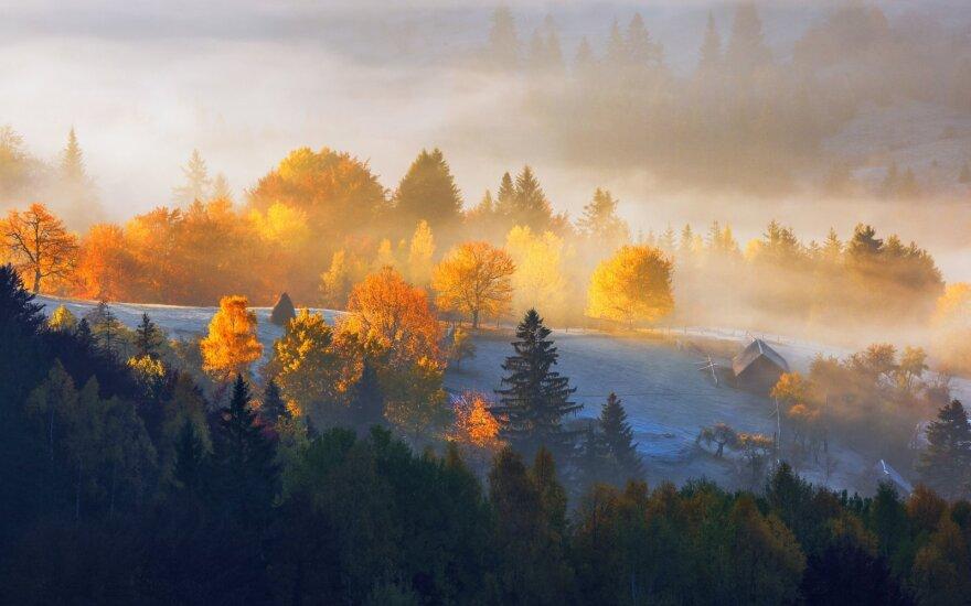Geriausias Lietuvos miškininkas apie tai, kaip ugdyti mišką, kad jis duotų kuo daugiau naudos