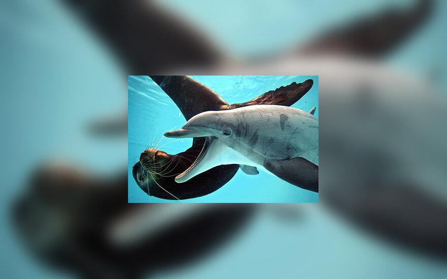 Žaidžia delfinas ir jūrų liūtas
