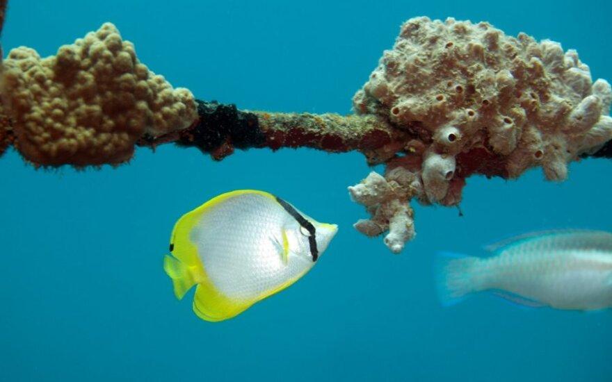 """<span class=""""delfi-highlight"""">Gražiausios salos:</span> Roatanas vilioja nuostabiu povandeniniu pasauliu"""