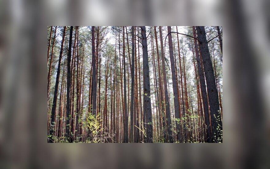 Dzūkijos kaime ekologiškas svajonių namelis išdygo tarp miškų