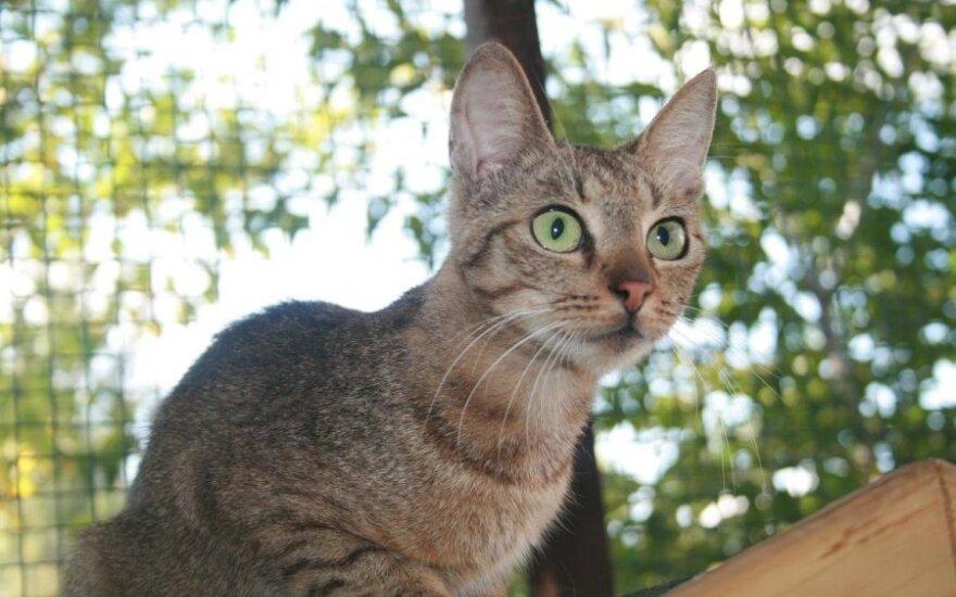 Katytė Nefrita – tikra gražuolė