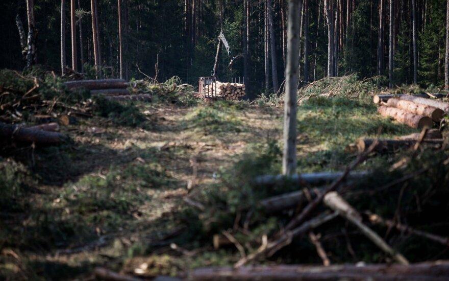 Vyriausybė nelinkusi sumažinti leidžiamos valstybinių miškų kirtimo normos