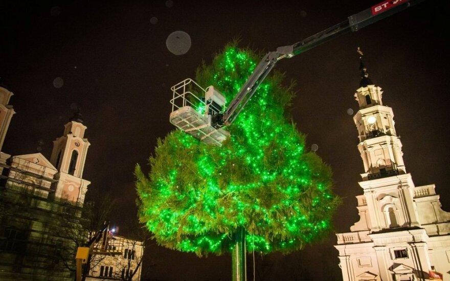 Kaunas vėl žada nustebinti savo Kalėdų egle