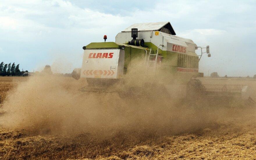 Įvertino derliaus kokybę – tragedija nekvepia