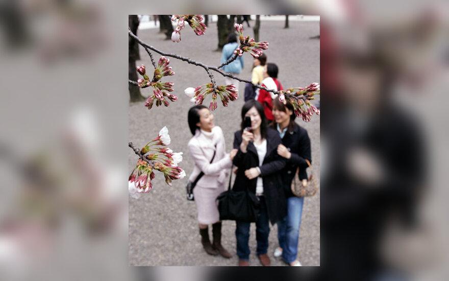 Japonės mobiliuoju telefonu fotografuoja bepradedančius skleistis vyšnių žiedus Tokijuje.