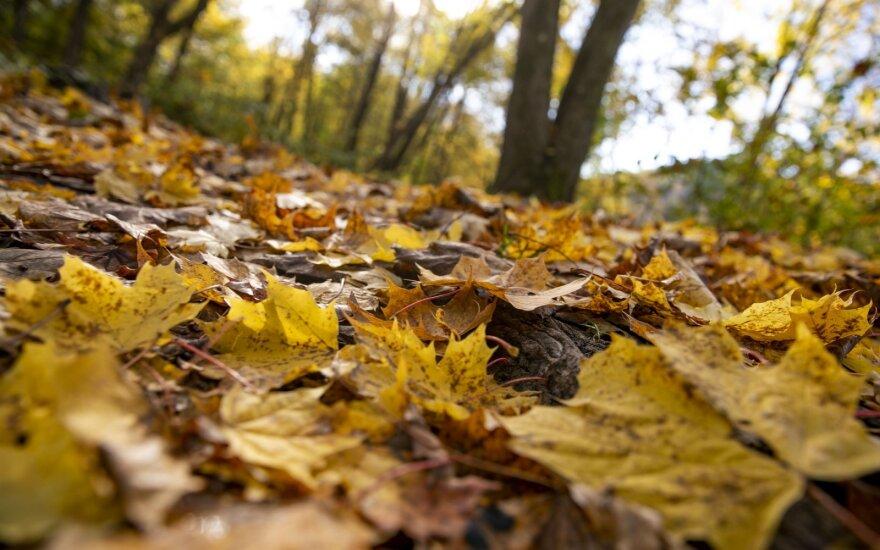 Žengiame į tikrą rudenį: nemalonūs orai lydės visą savaitę