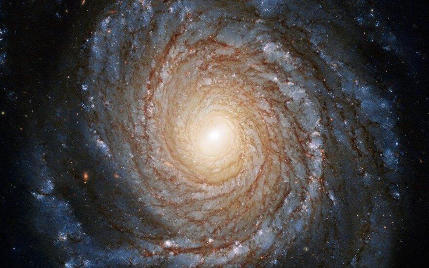 Aktyvi galaktika NGC 3147, nagrinėta šiame tyrime