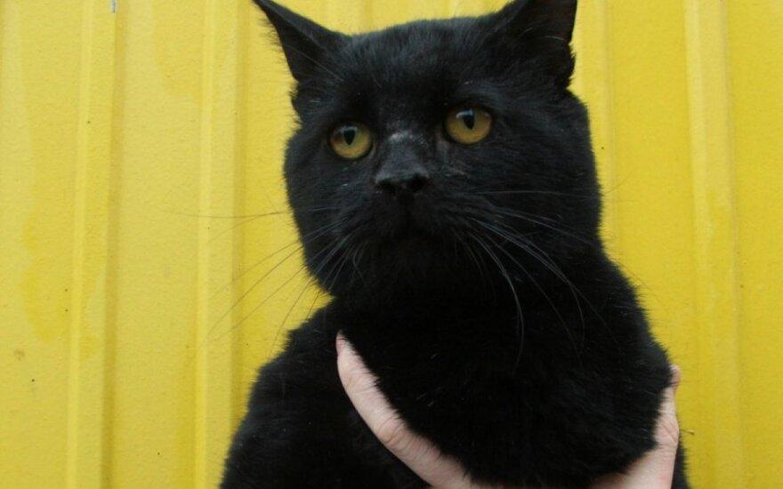 Salemonas - katinas mąstytojas