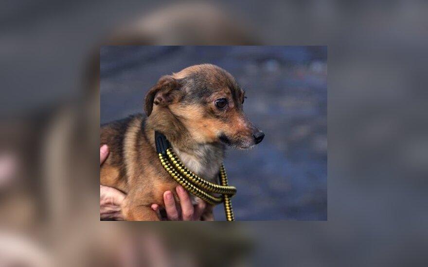 Šunys – paliekantys savo namus ir šeimininkus