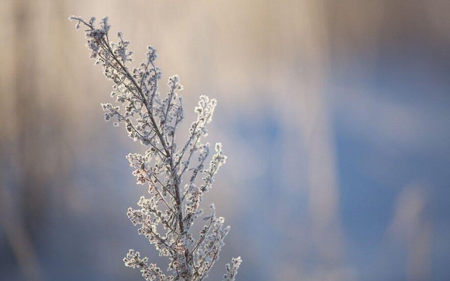 Žiema ateina: oro temperatūra kris vis žemiau