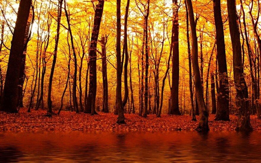 Astrologės Lolitos prognozė spalio 29 d.: ugnies diena