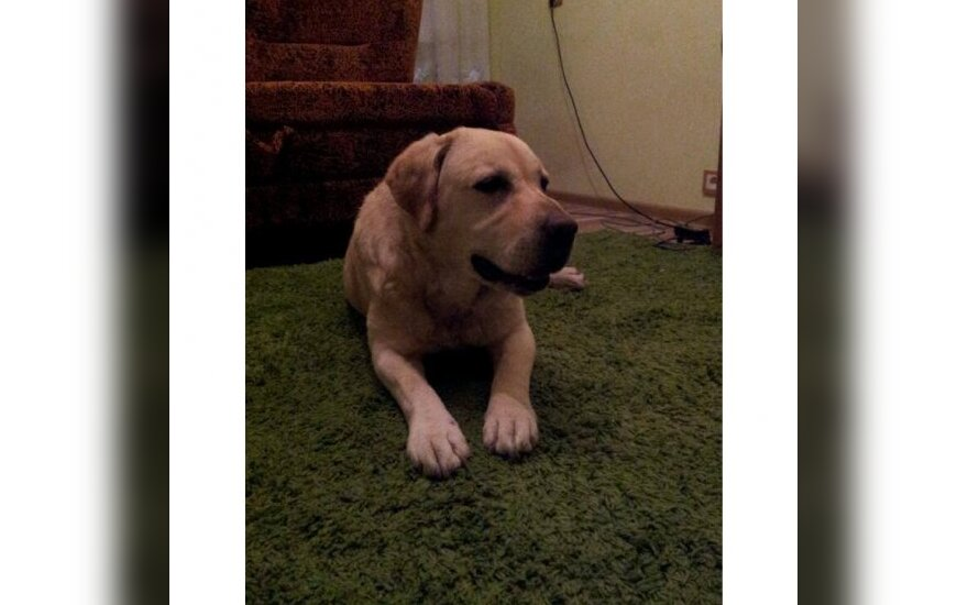Vilniuje rastas šuo!