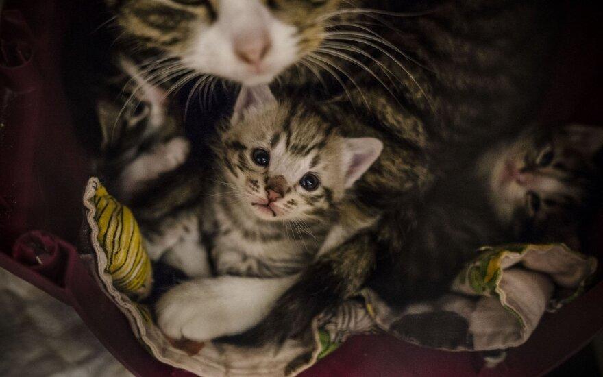 Mažais kačiukais perpildyta prieglauda prašo žmonių pagalbos