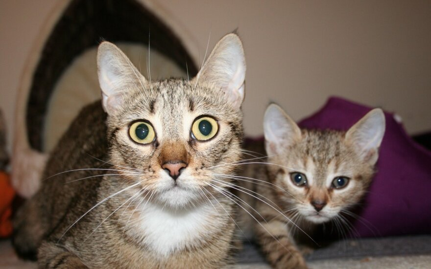 Dėkoja visiems padėjusiams: prašo ir toliau prisidėti prie kačiukų gerovės