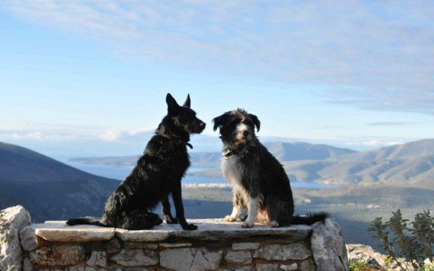 Laiminga istorija: kodėl du šunys geriau nei vienas