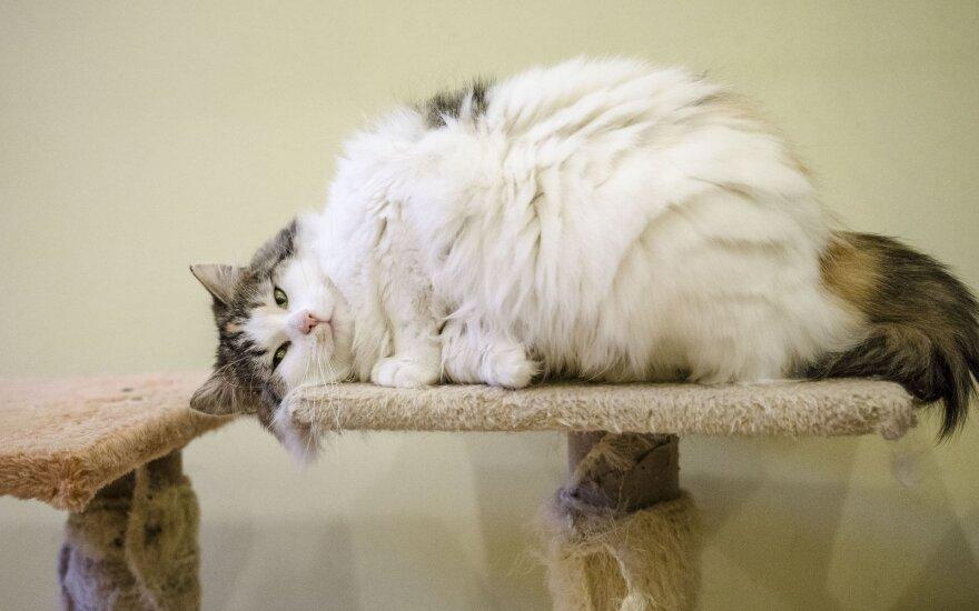 Švelnioji katytė Šarma ieško šeimininkų!