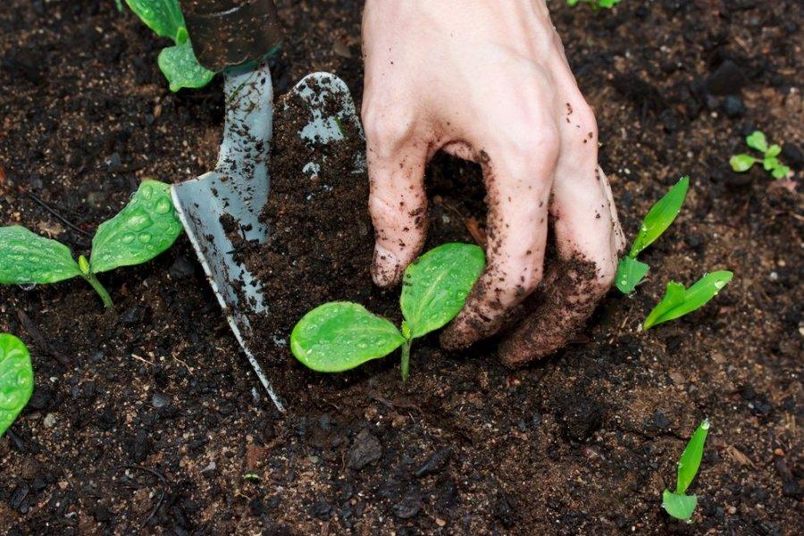 Kra tovaizd io architekt s patarimai kaip planuoti dar for What is soil science