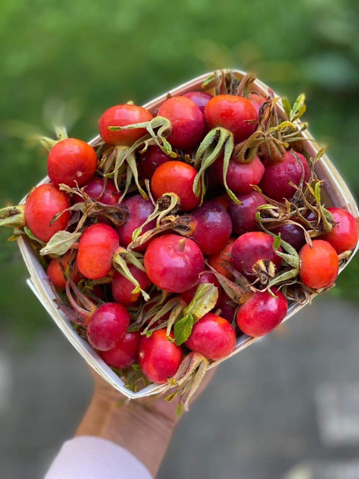 erškėtuogių vaisiai nuo hipertenzijos)