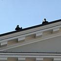 Ant Rotušės stogo apsaugą užtikrino specialiai apmokyti pareigūnai.