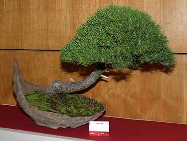 II bonsai paroda Alytuje_8