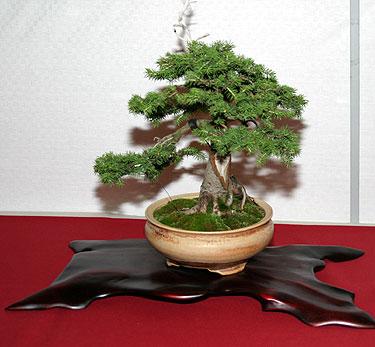 II bonsai paroda Alytuje_9
