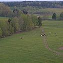 Karvės, kaimas, ganykla, galvijai, žemės ūkis